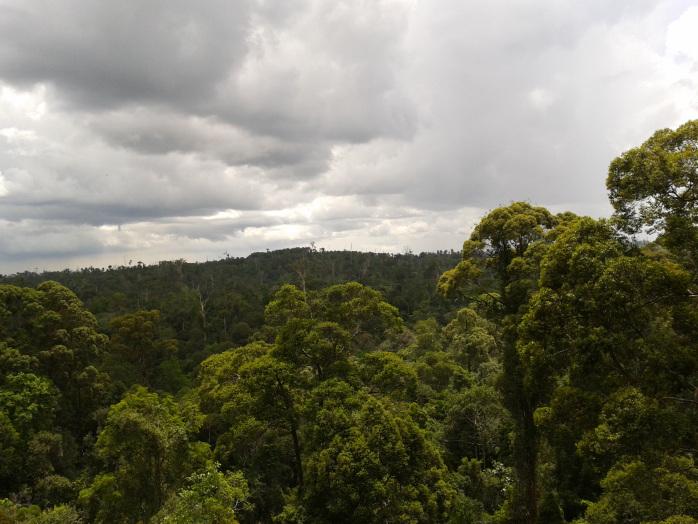 Hamparan pepohonan hijau dan awan putih