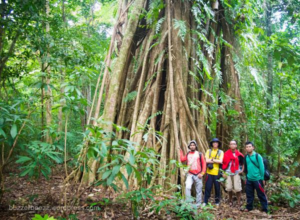 Selamatkan Hutan Aceh!