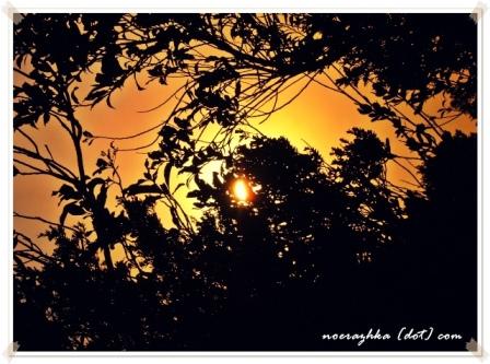 Hutan Gn. Salak Merangkum Senja ..