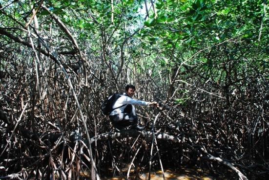 Hutan bakau di Taman Nasional Baluran