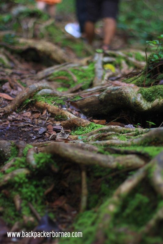 Hutan dan Lumut