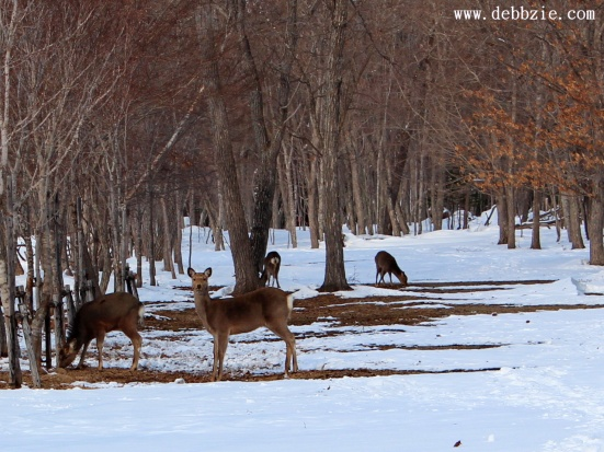 Hutan Putih Yang Membeku