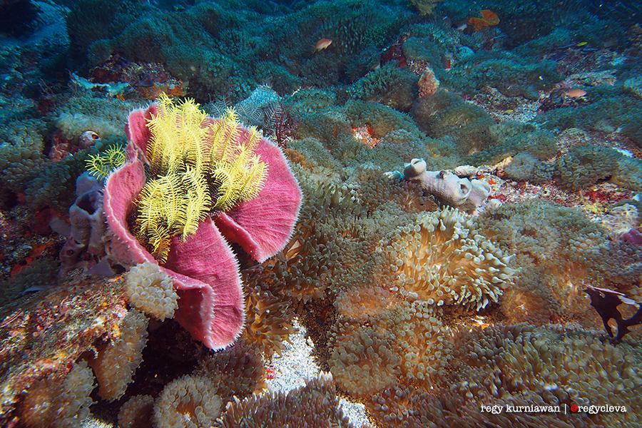 Anemone City - Alor! Ini adalah kompleks permukiman Nemo terbesar di Indonesia bahkan mungkin dunia. Berbagai jenis anemone dan penghuninya terhampar luas di diving spot ini. Olympus OMD EM5, speed 1/125, f/8, ISO 200, dual strobe.